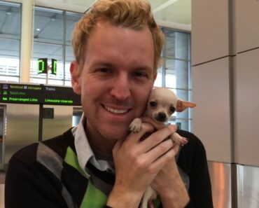 Surprises Boy With Micro New Chihuahua Puppy