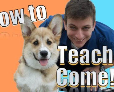 Come when Called: The FASTEST Way to Teach YOUR DOG