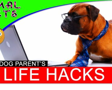 10 Life Hacks for Dogs – Dogs 101