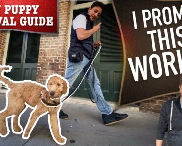 How To Train Your Dog to Walk on Leash WITHOUT