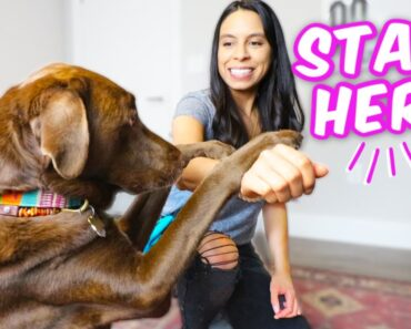 10 EASY DOG TRICKS IN 10 MINS Promise, they're easier