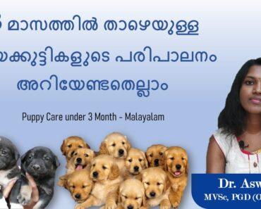 Puppy Care below 3 Months – Malayalam