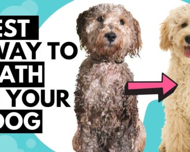HOW to give a dog/puppy bath like a PROFESSIONAL at