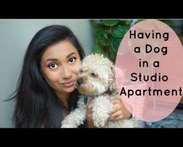 SHOULD YOU GET A DOG?