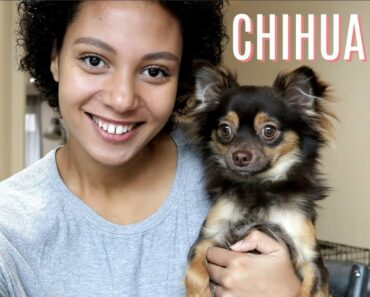 THE REALITY OF HAVING A CHIHUAHUA