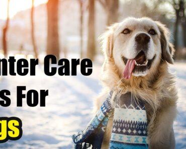 5 Dog care Tips For Winter Season