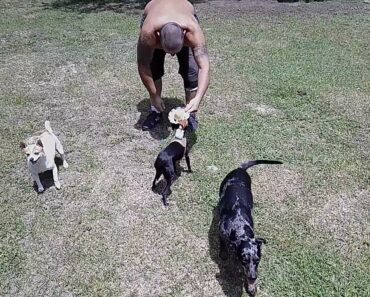 My Chihuahua Dog Jasmine Funny Ride'm Cowboy Video