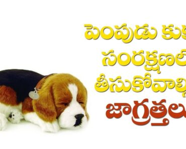 Pet Dog Care And Protect Tips | Part-1