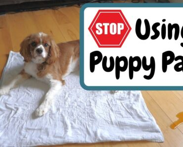 Stop Using Puppy Pads (For Faster Potty Training)