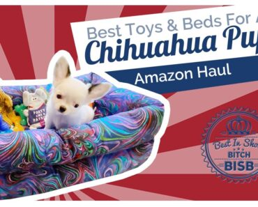 What are the Best Toys, Treats and Beds for Chihuahuas