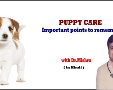 PUPPY CARE TIPS II Explained II dog and vet II