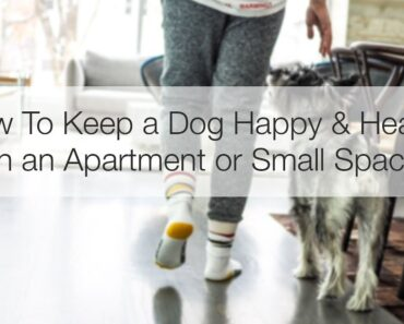 How to Keep a Dog Happy & Healthy in an