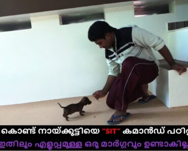 dog training : sit command Malayalam : kerala dog training