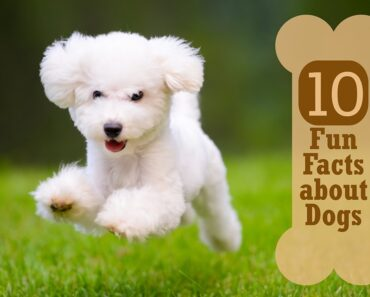 10 Fun Facts about Dogs