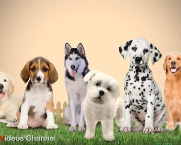 6 Important Tips for New Dog Owners