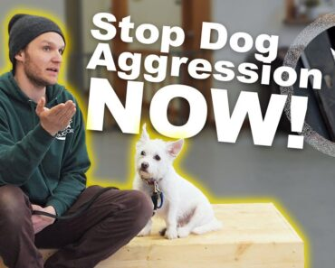 How to STOP DOG AGGRESSION- Dog Training with America's Canine