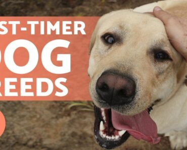 5 DOG BREEDS for BEGINNERS (Don't Miss the Last One!)