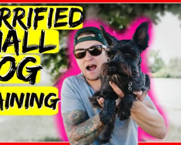 How to build confidence in a small fearful dog
