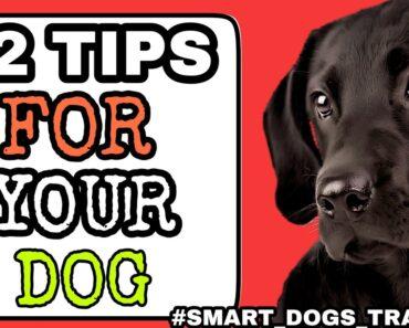 12 tips Dog Ke Liye