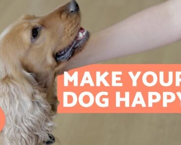 How to Make Your DOG HAPPIER