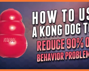 How to Use a Kong Dog Toy