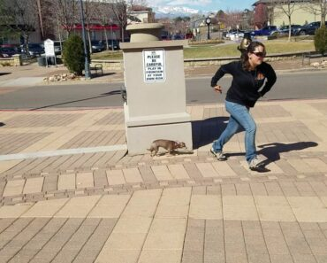 7-Year-Old Chihuahua Nola! Best Dog Training in Colorado Springs!
