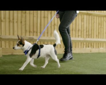 How to Stop Your Dog Pulling on the Lead |