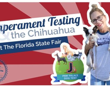 Temperament Testing Dogs and the Chihuahua