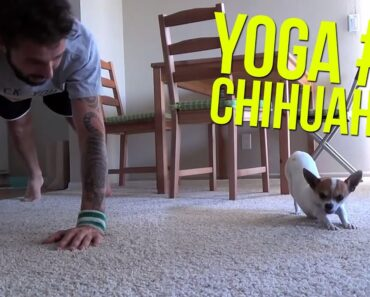 Yoga Time with a cute Chihuahua #2
