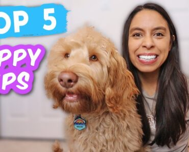 New Puppy Tips EVERYONE Should Teach Easy & life-saving cues