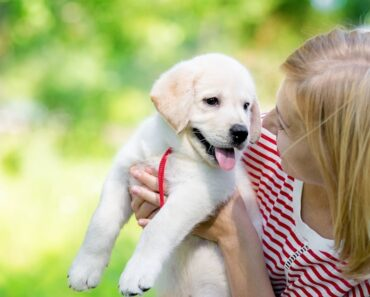 10 First Time Dog Owner Tips (Based on My Personal