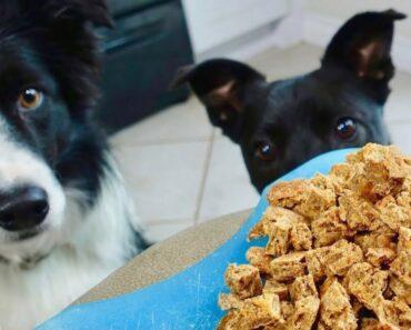 The Best Homemade Dog Treats