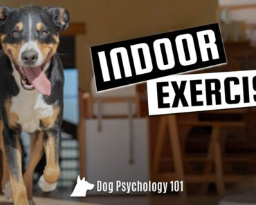How to Exercise Your Dog Indoors