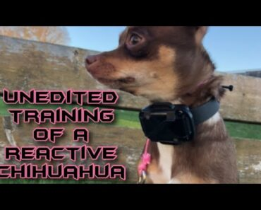 The MOST difficult dog ever! Reality dog training with a