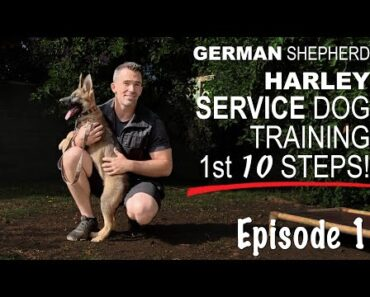 First 10 Steps When Training a Service Dog