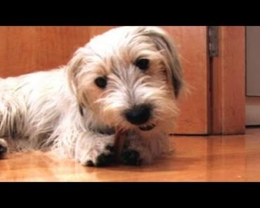 How To Do Dog Care