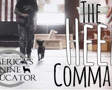 How to Teach your dog the Heel command
