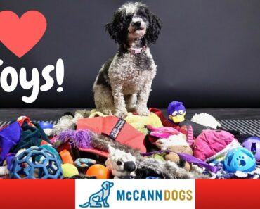 Teach Your Dog To LOVE Playing With Toys And How