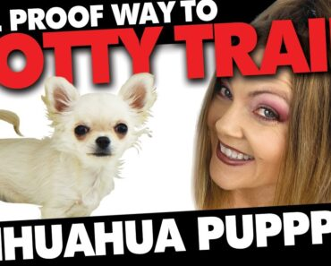 Potty Training your Chihuahua 100% Fool Proof Method