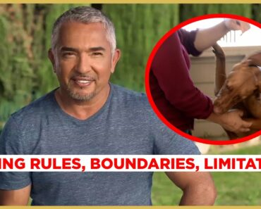 How to STOP PUPPY BITING! (Cesar911 Shorts)