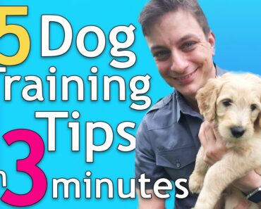 5 Dog Training Tips in 3 Minutes that will Change