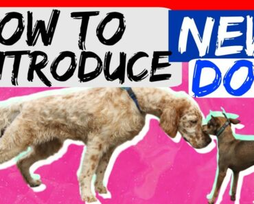 How to bring a new dog to your dog at