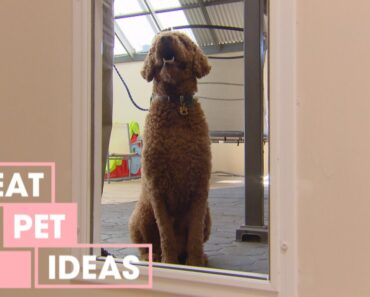 How to Teach Your Dog to Use a Doggie Door