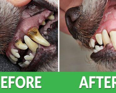 How to Fix Bad Dog Breath?