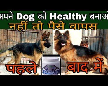 ABB Apne dog Ko bnaye Healthy Varna Pese Wapas/how to