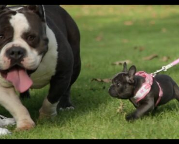 Top 10 Mistakes New Dog Owners Make