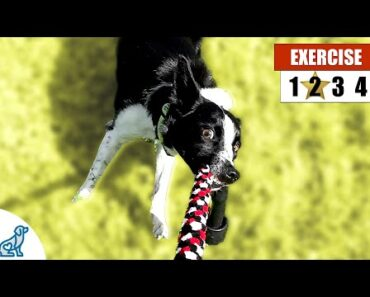 """4 Quick Ways To Exercise Your Dog Without """"Walking"""""""