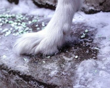 Dog Paw Tips For Winter